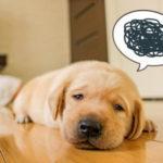 【ハヌルショット】インスタ画像がヤバい!韓国で流行!動物虐待という声も!?